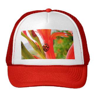 paños cómodos mariquita y flor gorras