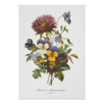 Pansies and Anemone Poster