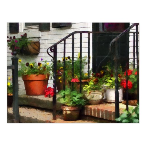 Pansies and Geraniums on Stoop Post Cards