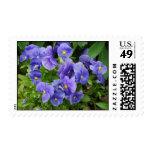 Pansies at Graeme Park Postage Stamps