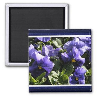 Pansies: Blue Violet 2 Inch Square Magnet