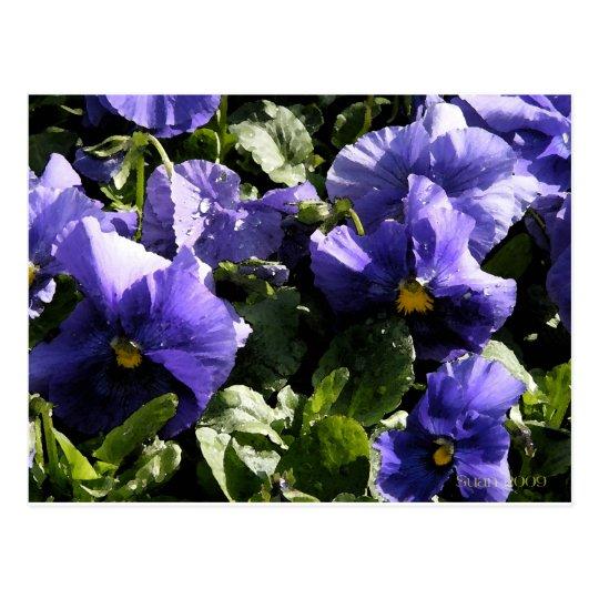 Pansies: Blue Violet Postcard