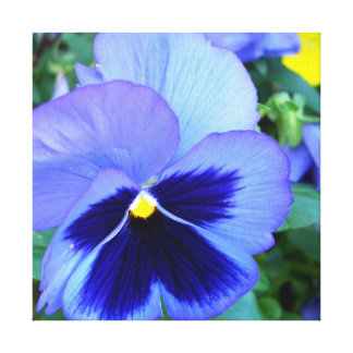Pansies CricketDiane Photographic Floral on Canvas