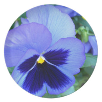 Pansies - CricketDiane Photographic Floral Plate