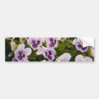 Pansies flowers bumper sticker