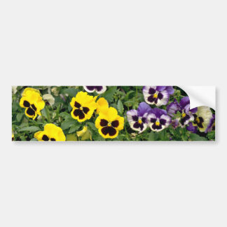 Pansies  flowers bumper stickers