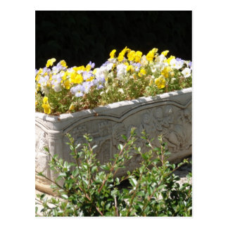 Pansies In A Sarcophagus Planter Postcard