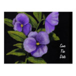Pansies in Color Pencil: Save the Date Postcard