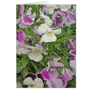 Pansies of Many Colors Greeting Card