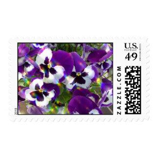 Pansies Postage Stamps