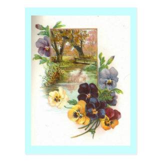 pansies post card