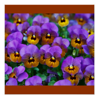 Pansies Red Vines Spring Love Peace Destiny Poster
