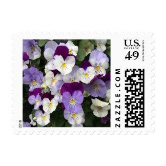 Pansies stamps