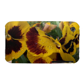 Pansies with Water Droplets iPhone 3 Cover