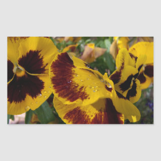 Pansies with Water Droplets Rectangle Stickers