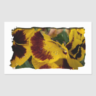 Pansies with Water Droplets Rectangular Stickers