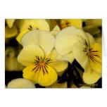 Pansies: Yellow Greeting Card