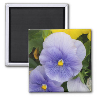 Pansy 2 Inch Square Magnet