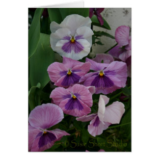Pansy A-290 Card