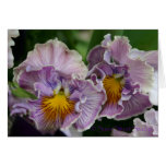 Pansy A-315 Greeting Cards