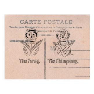 Pansy and Chimp Humor Postcard