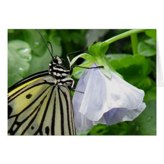 pansy dance ~ 2009 butterfly series ~ note card