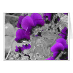 Pansy Effect Cards