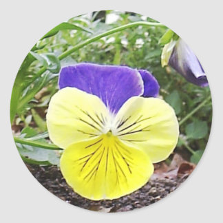 Pansy Face Sticker