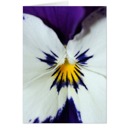 Pansy Flower Any Occasion Note Or Greeting Card