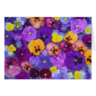 Pansy flowers floating in bird bath with dew card