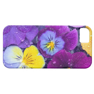 Pansy flowers floating in bird bath with dew iPhone 5 cases