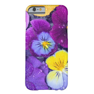 Pansy flowers floating in bird bath with dew barely there iPhone 6 case
