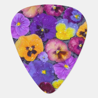 Pansy flowers floating in bird bath with dew pick