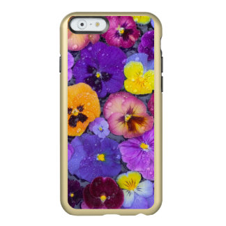 Pansy flowers floating in bird bath with dew incipio feather® shine iPhone 6 case