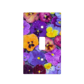 Pansy flowers floating in bird bath with dew light switch cover