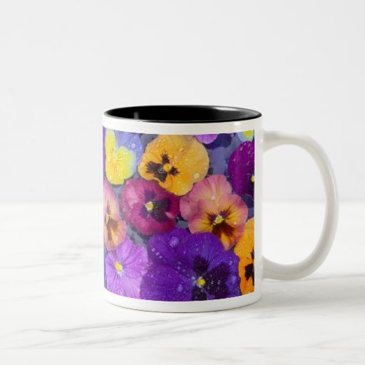 Pansy flowers floating in bird bath with dew coffee mugs