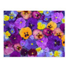 Pansy flowers floating in bird bath with dew postcard
