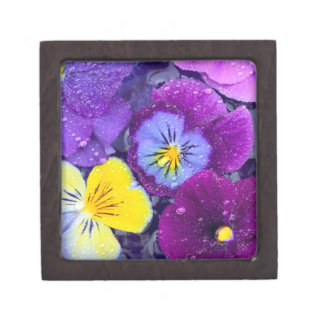 Pansy flowers floating in bird bath with dew premium trinket boxes