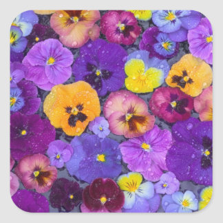 Pansy flowers floating in bird bath with dew square sticker