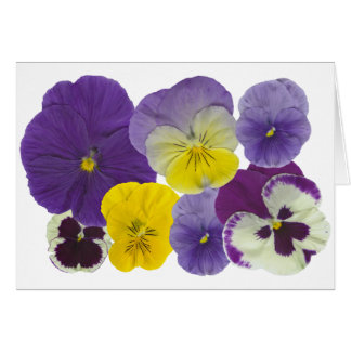 pansy flowers greeting cards