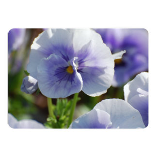 Pansy Flowers Cards