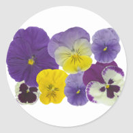 pansy flowers sticker
