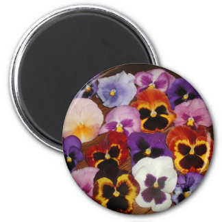 Pansy fridge magnet