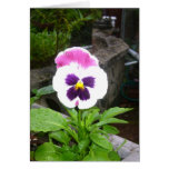 Pansy Galore Greeting Card