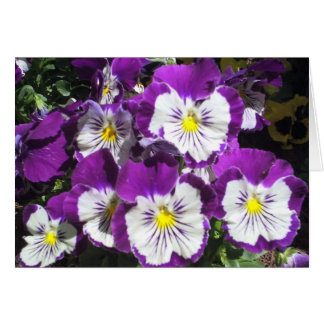 Pansy Garden Card