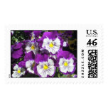 Pansy Garden Postage