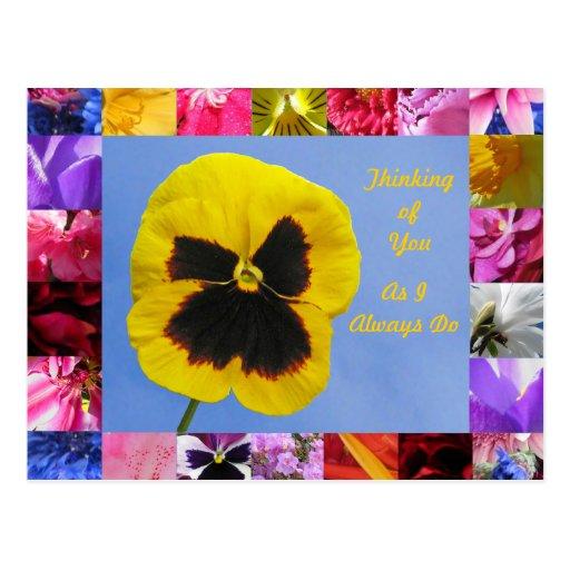 Pansy Garden Postcard