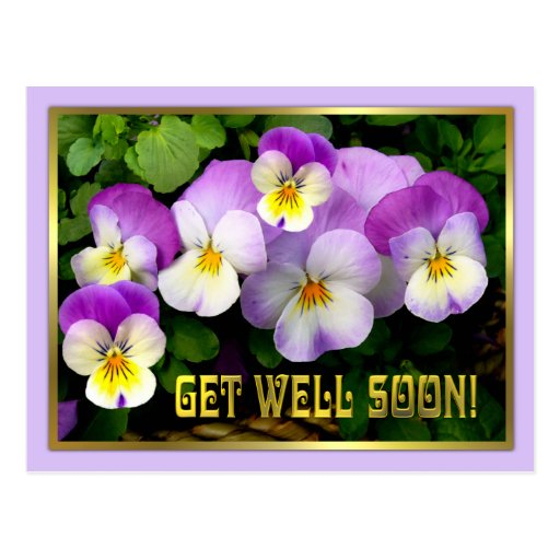 Pansy ~ Get Well Postcard