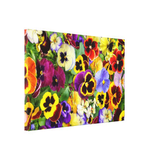 Pansy Glory   ~ Wrapped Canvas Print