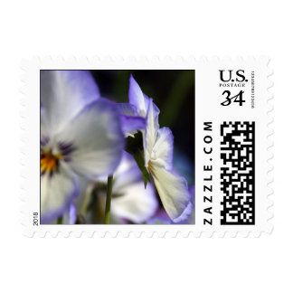 Pansy I'm thinking of forbidden love Postage 5b